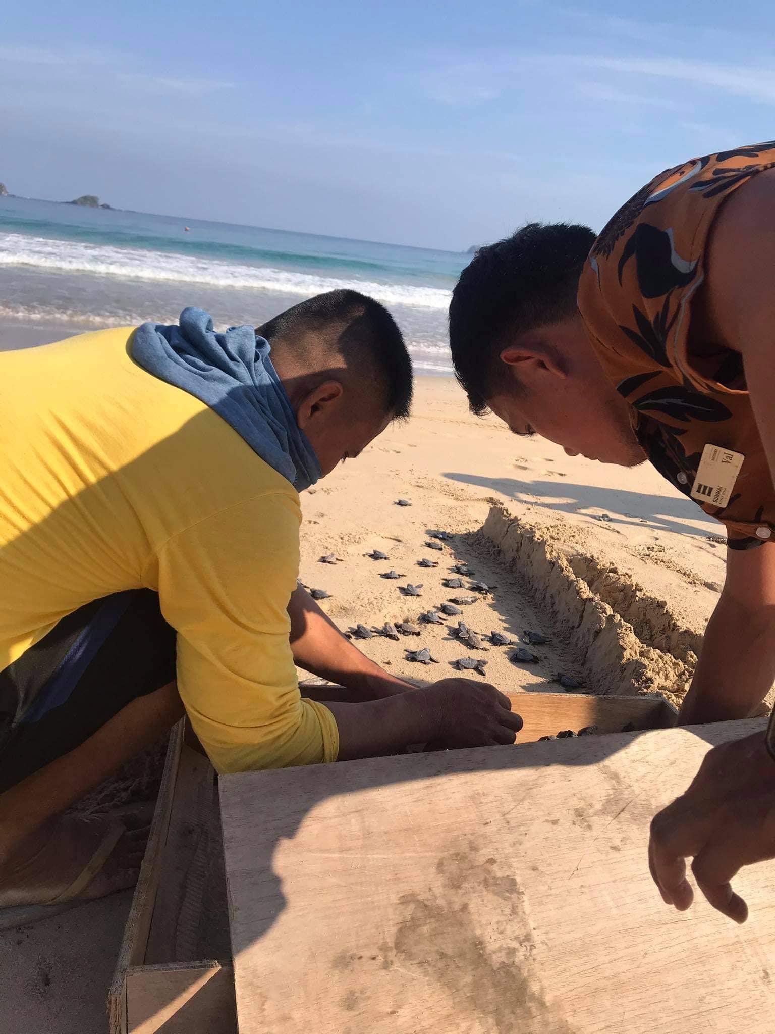 愛妮島海龜季