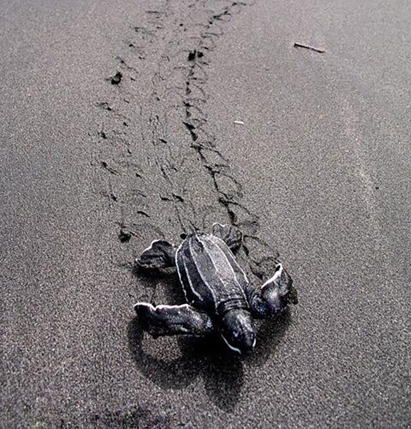 小海龜又誕生了!!!