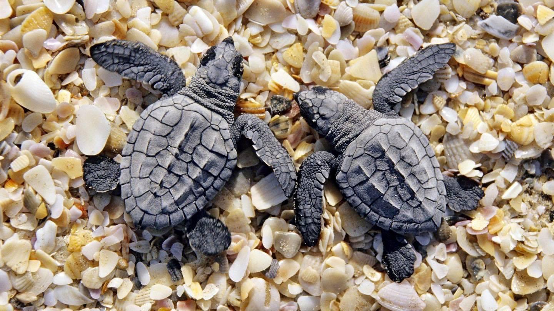 2020海龜季正式結束