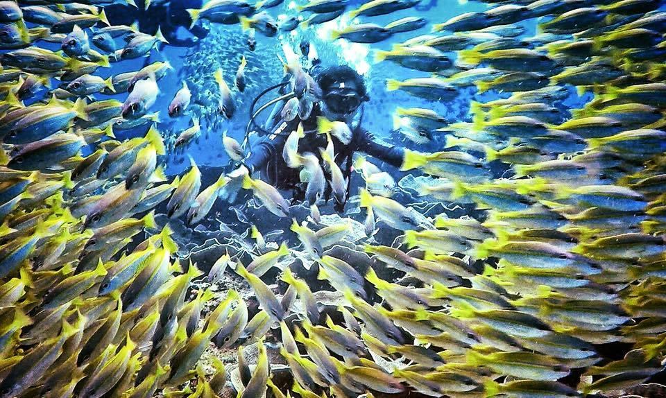 愛妮島推薦潛店「Deep Blue Dive Seafari」