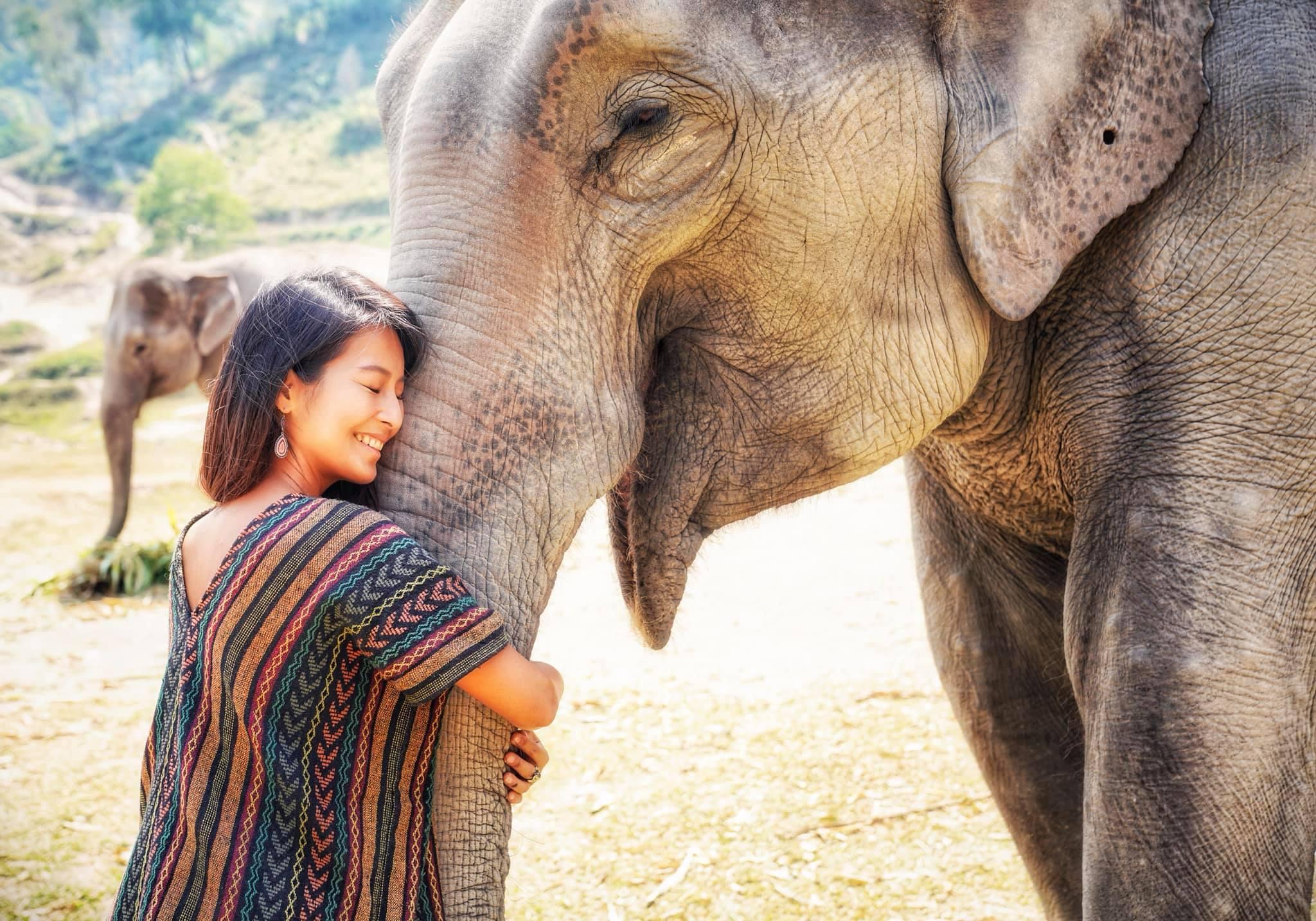 清邁大象義工