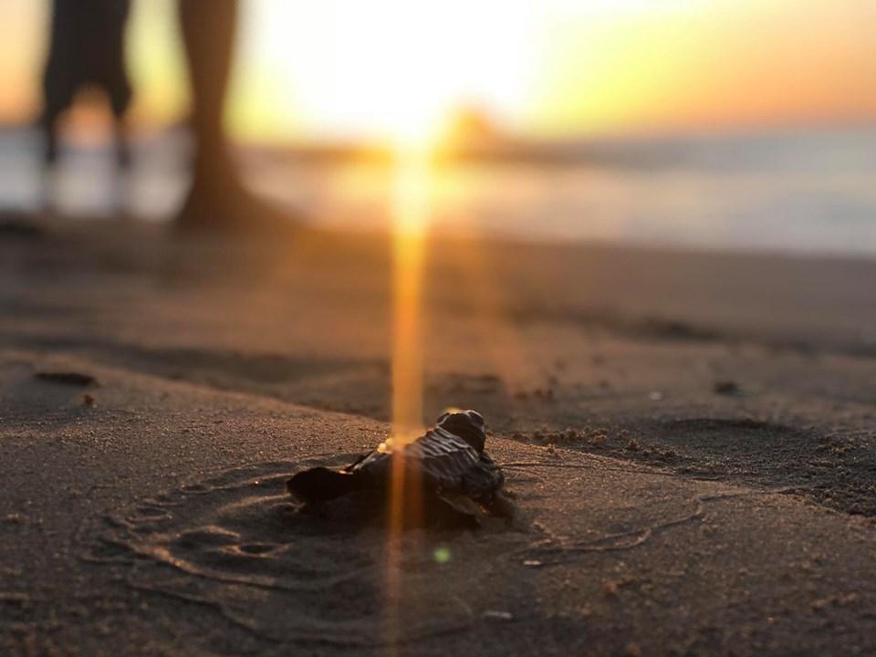 523世界海龜日