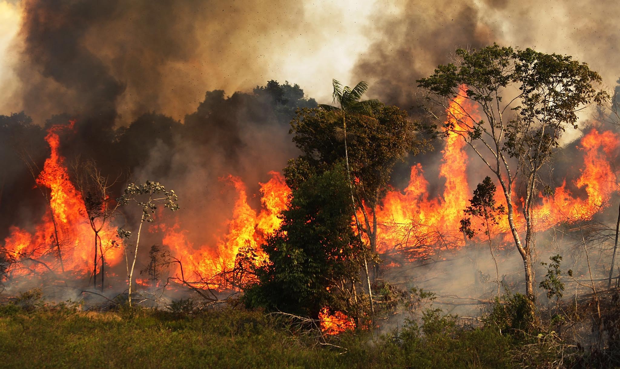 亞馬遜雨林大火三週,燒到外星人都看得到⋯心痛之於,我們到底能幫忙做些什麼?