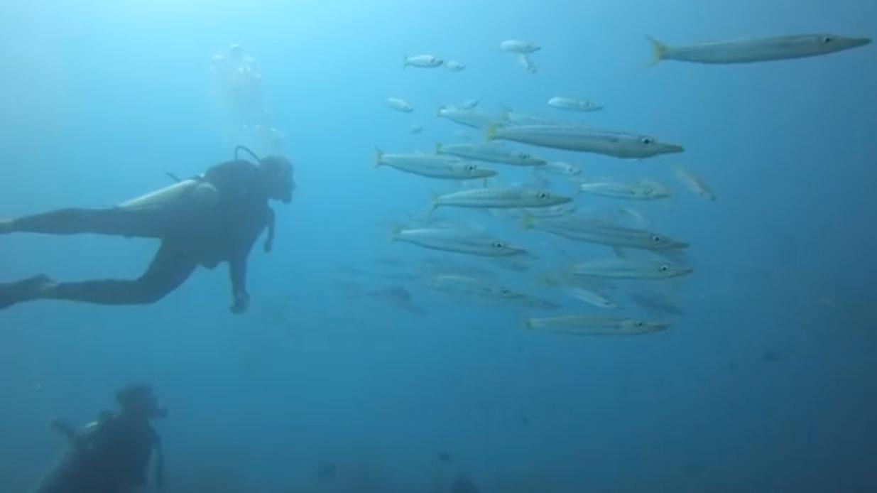 愛妮島的新年第一潛
